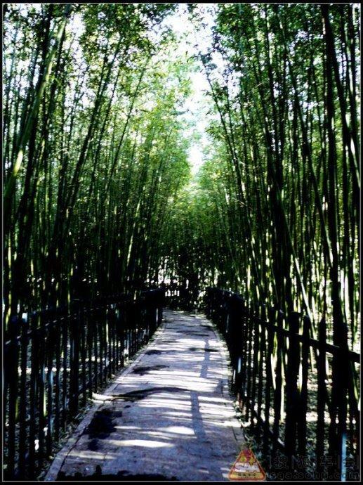 慧芳园里的曲径通幽-竹林